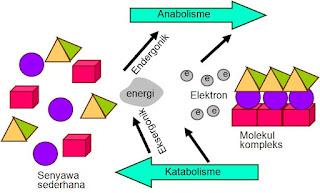 Contoh Soal Katabolisme Dan Anabolisme Kunci Jawaban