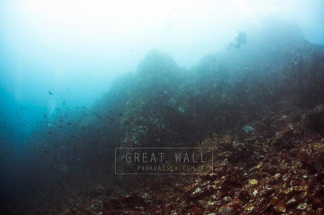 Learn Scuba, Underwater Photography, Padi