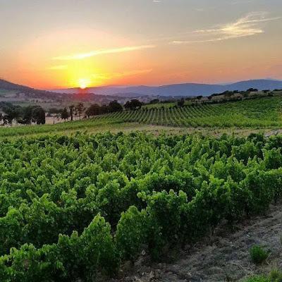 Giuseppe Sedilesu winery in Sardinia