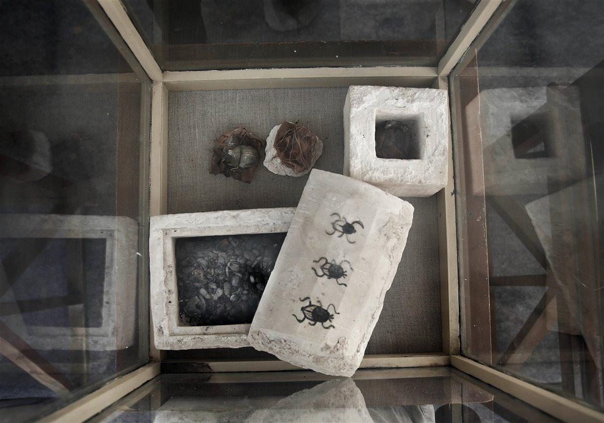 Un pequeño sarcófago de caliza, en cuya tapa aparecen tres escarabajos pintados en negro, contenía dos grandes escarabajos momificados; y otra caja de caliza, más pequeña, cuadrada y decorada con un escarabajo en negro, también contenía otros escarabajos momificados. Foto: Nariman El-Mofty / AP Photo / Gtres