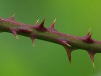 5 mauvaises herbes qui font du bien