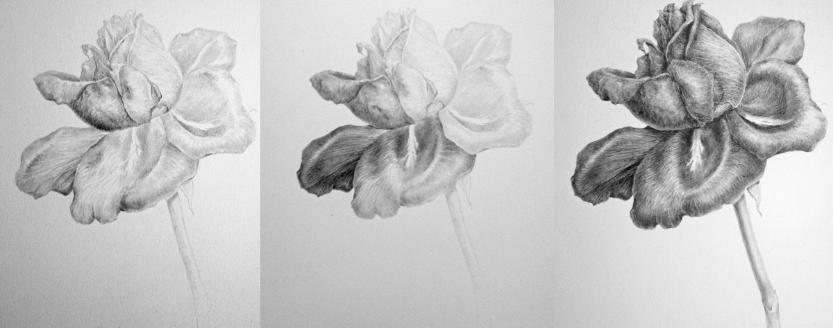 Various stages showing the build up of tone using increasingly softer grades of pencil