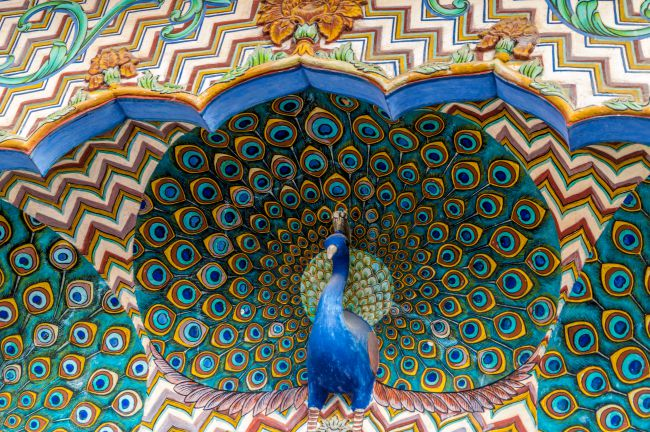 Beautiful peacocks at Peacock gate - Pritam Chowk City Palace Complex Jaipur