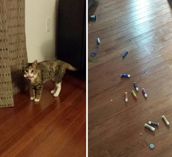 """14 minh chứng cho thấy mèo cũng mắc bệnh """"đồng nát"""" chẳng kém con người"""