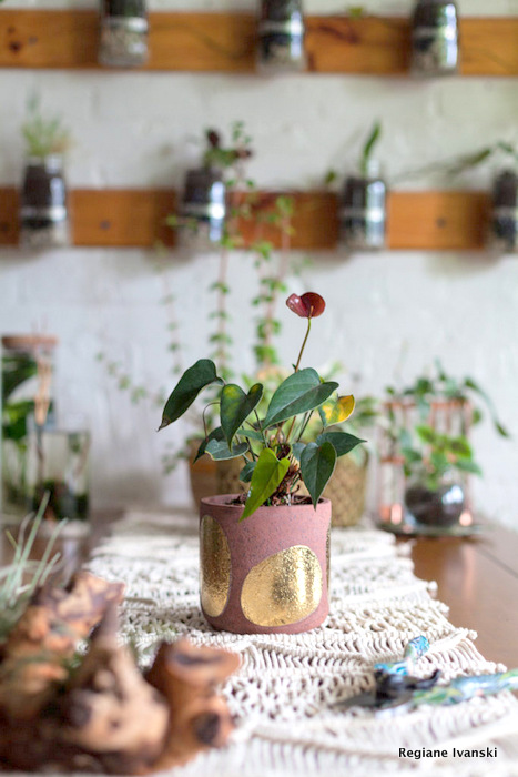 3 dicas para ter plantas dentro de casa