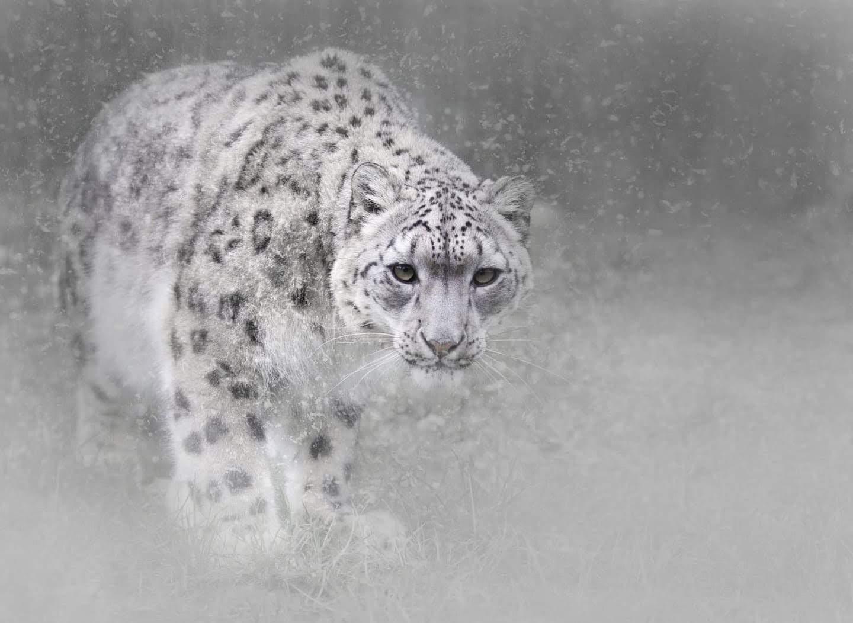 Mùa đông, tuyết rơi, rét lạnh, hình ảnh, snow, winter, image, wallpaper