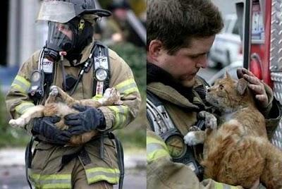 Penyelamatan kucing! 2