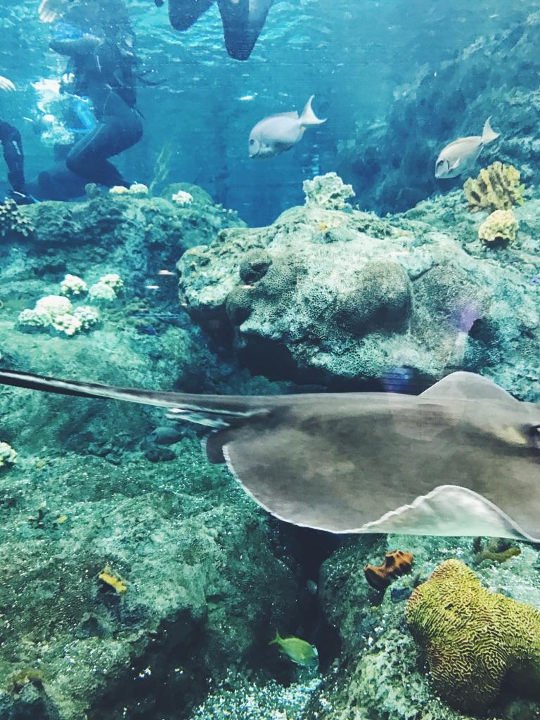 florida aquarium9