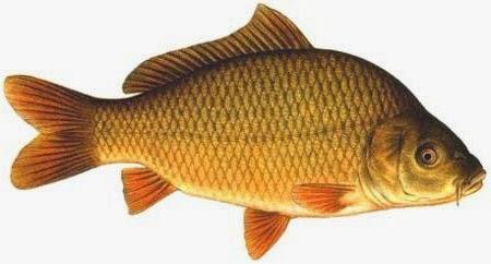 Resep Umpan Jitu Mancing Ikan Tombro