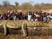Telan 300 Manusia, Buaya Legendaris di Seluruh Afrika Ini Tak Pernah Ditangkap, Peluru AK47 Tak Mampu Menembus Kulitnya
