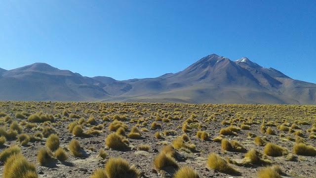 La Paja Brava domina el paisaje altiplánico