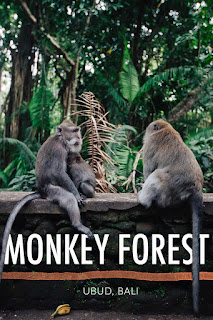 Visiting Bali Less Complete If not Visit Monkey Forest Ubud