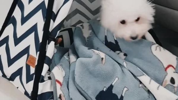 Adorable pup tucks herself in for bedtime