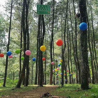 wisata hutan pinus songgon