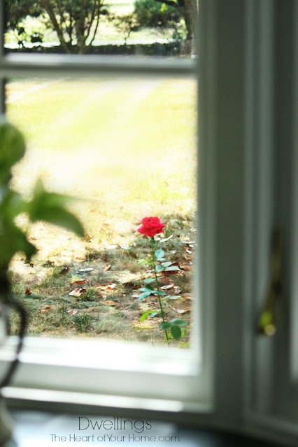 Red rose through the kitchen window