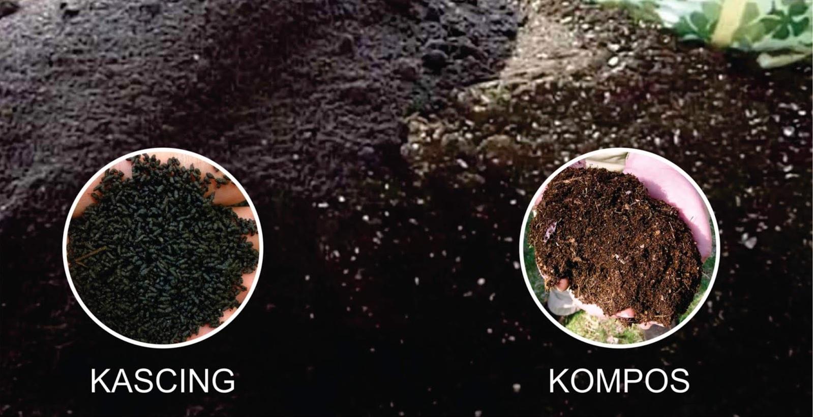 Pupuk Bekas Cacing (KasCing) Untuk Kesuburan Tanah