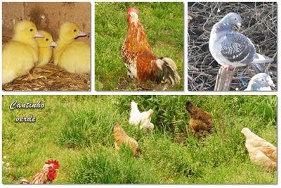 Remédios naturais para aves