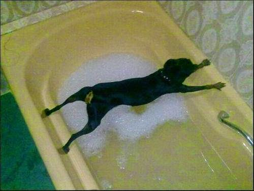 Funny dog refuses to get into the bath
