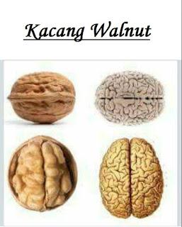 Manfaat Kacang Walnut dan Makanan Terbaik Untuk Otak