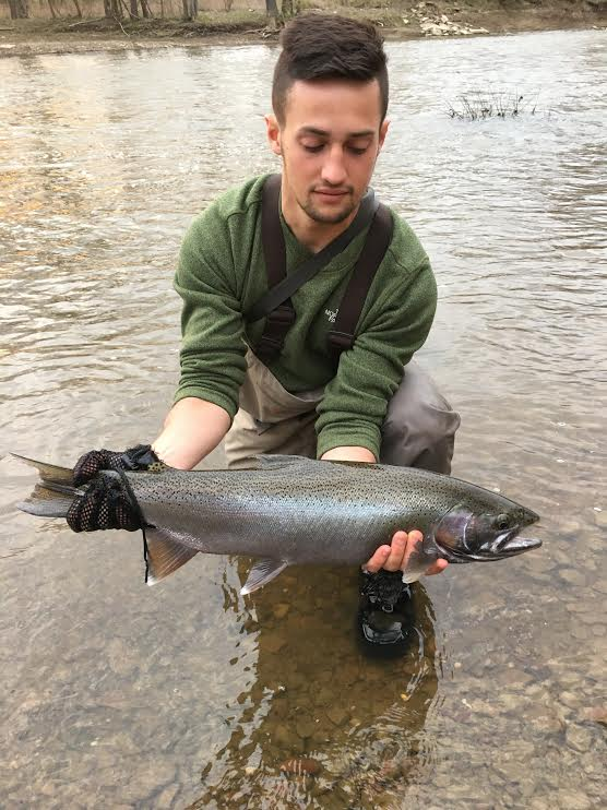 Mad river outfitters fishing reports 4 21 17 for Fish steelhead alley