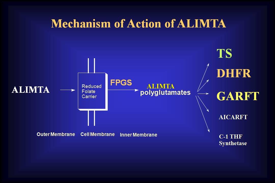 Malignant Mesothelioma Powerpoint Mesothelioma