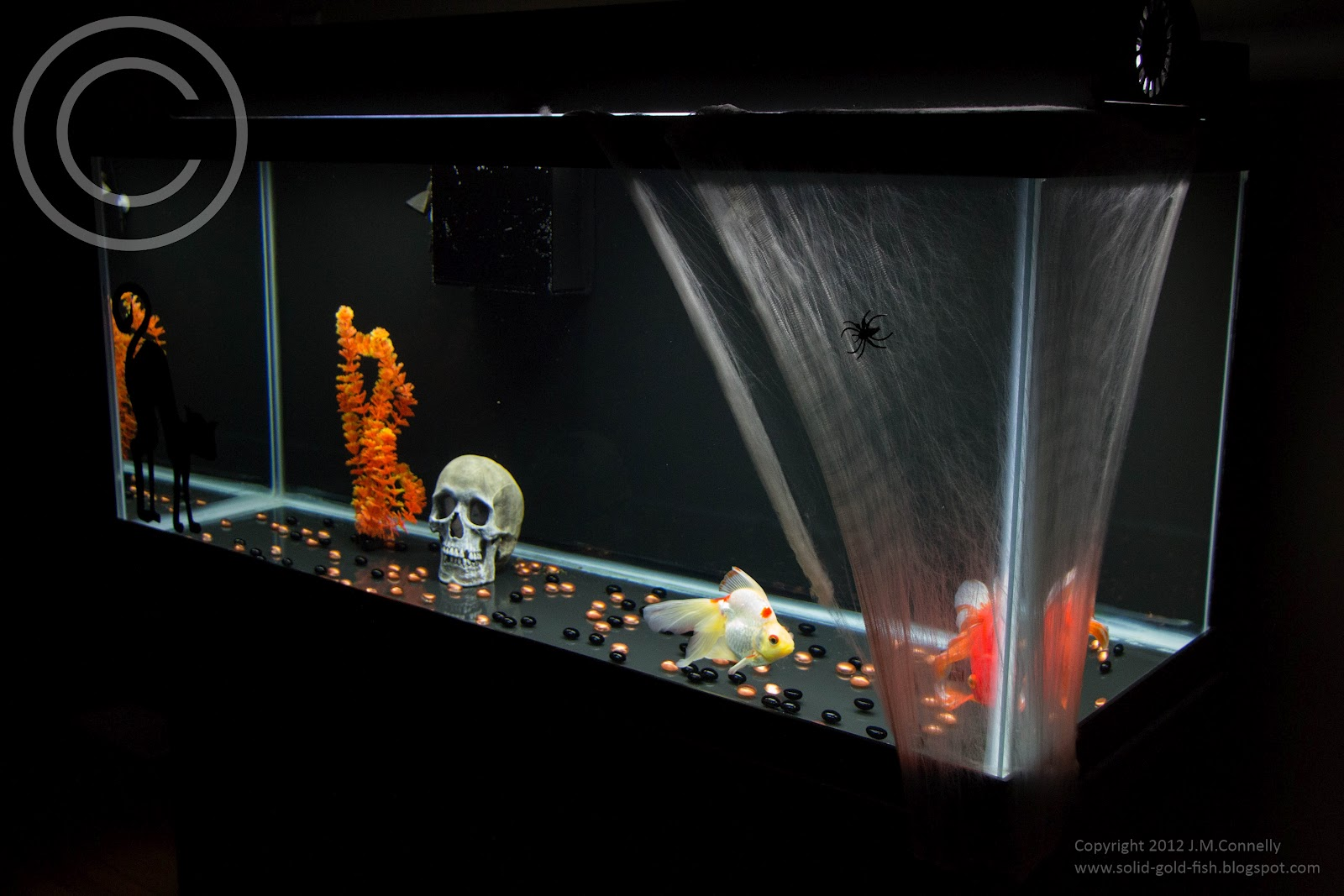Solid Gold: My Halloween Themed Aquarium