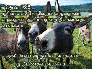 1918840_210554665974643_1612780841321790