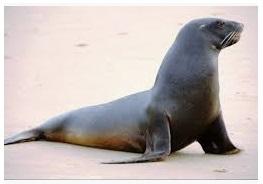 Jenis-jenis mamalia laut