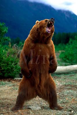 Angry Bear Standing Funny Collection World
