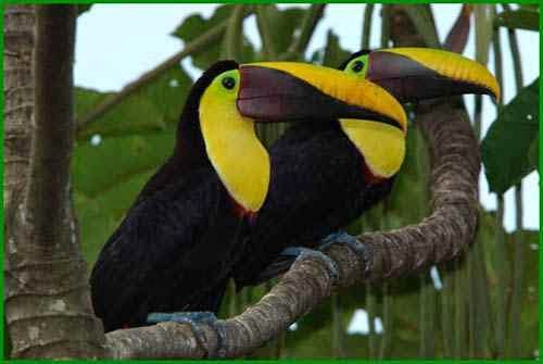 هل تعلم ان نصف طيور العالم فى الغابات الاستوائيه !