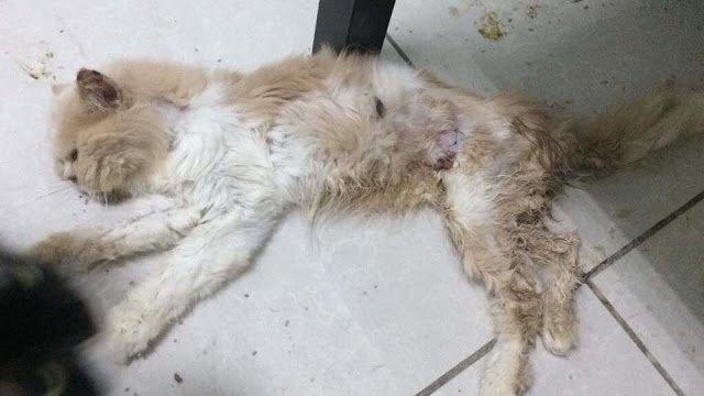 Kisah Benar Seram Sihir di House of Cat, Seksyen 7, Shah Alam