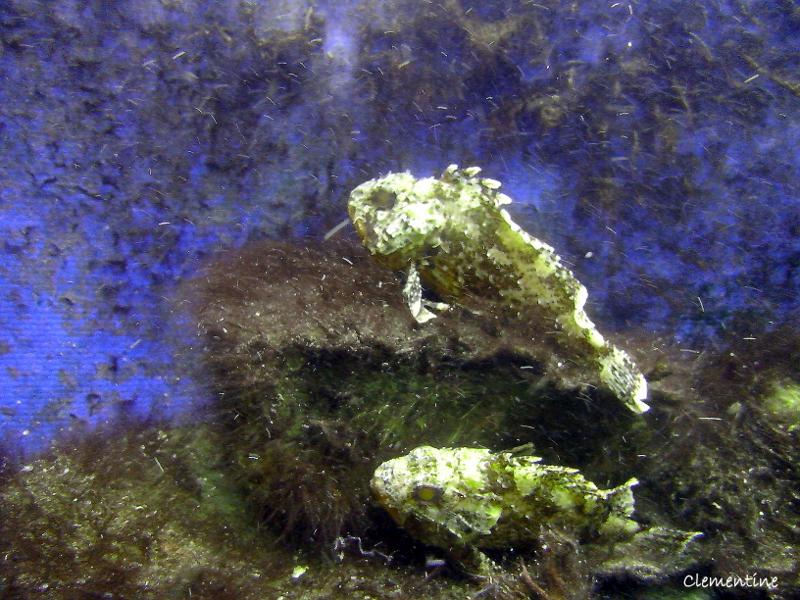 le de clementine l aquarium de canet en roussillon 66