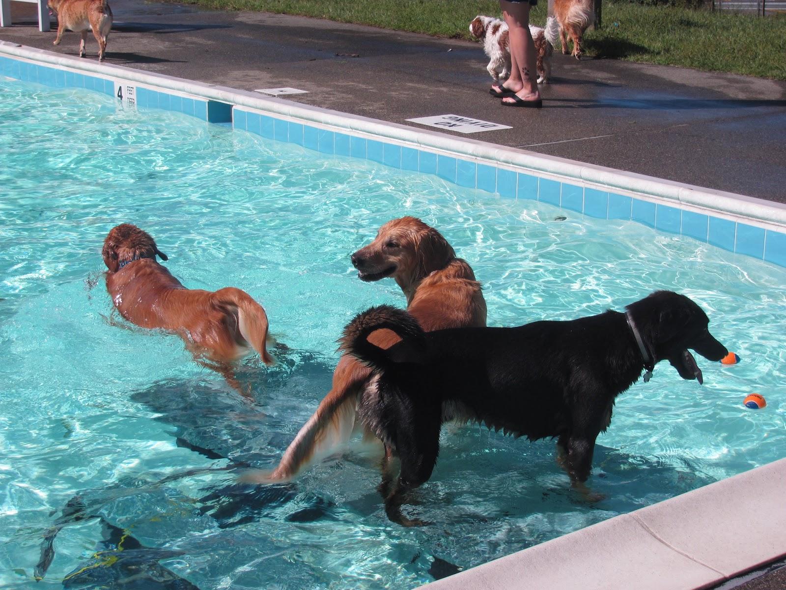 Edgemont Reflections Dog Days Of Summer