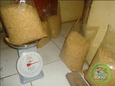 FOTO 2:  Pengemasan dan penimbangan benih Padi TRISAKTI