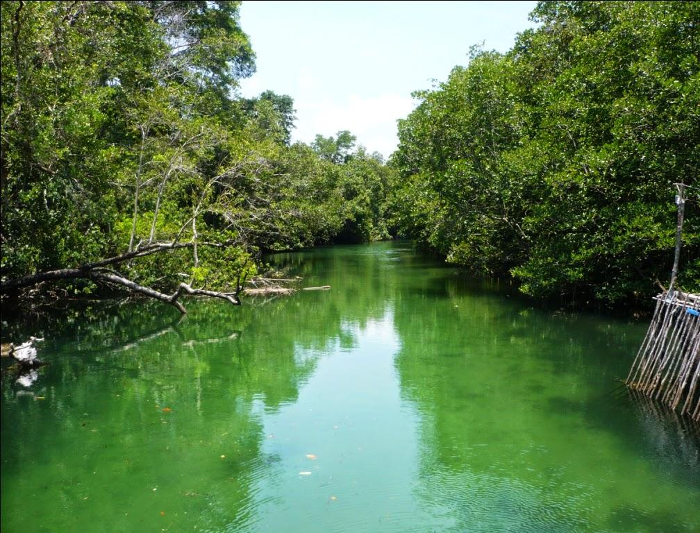Mengamati Kunang-Kunang di Hutan Mangrove Sungai Sebong Bintan ~ Tempat Liburan Terbaik