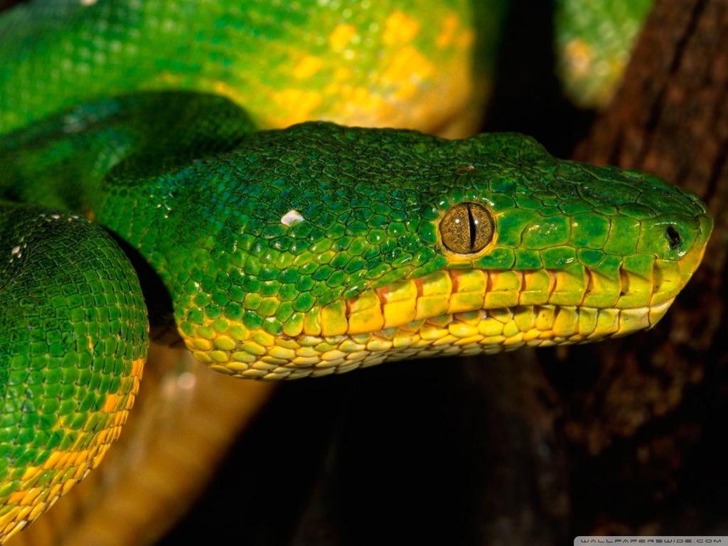 Katrina Kaif 3d Wallpaper Snake Wallpaper 3d Wallpaper Nature Wallpaper Free