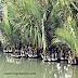 Photo Gallery- Sundarban National Park