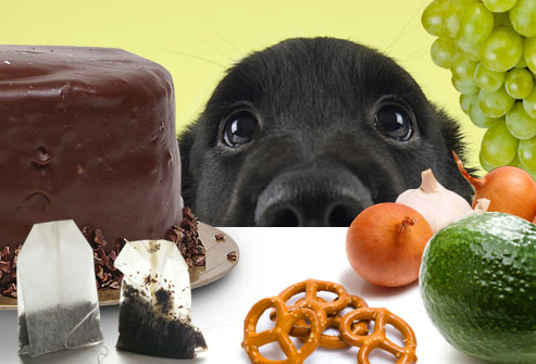 Oh My Dog Holistic Doggery Foods Your Dog Should Never Eat