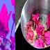 The Amazing Health Benefits of Bougainvillea Flower That Can Save Your Life