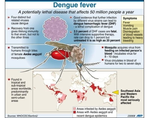 Info about dengue essay