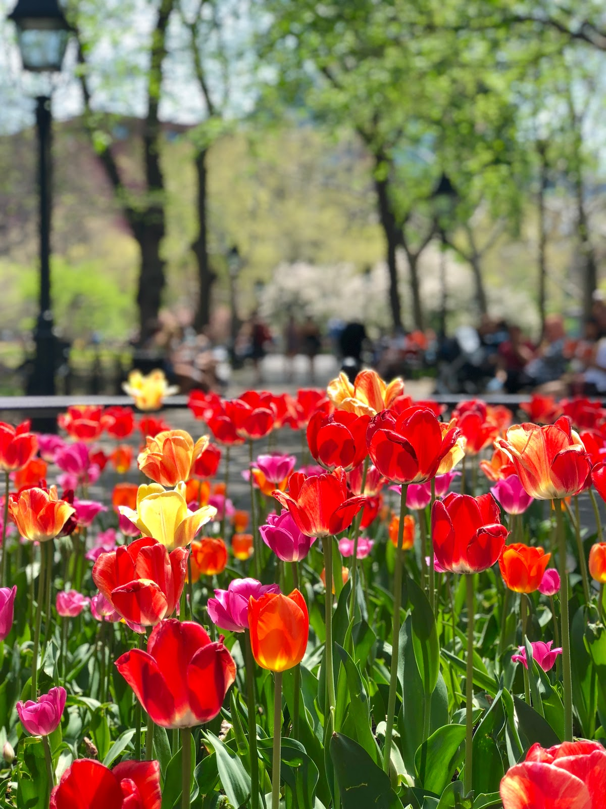 Washington Square Park, Spring 2018, New York City, Photos by Jessica Marie Kelley