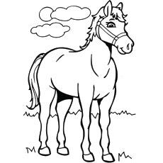 Best Of Horse Coloring Pages Animals
