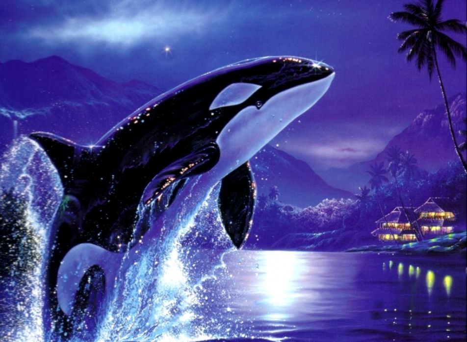 Orca Whales Hd Wallpaper Wallpapers Heroes