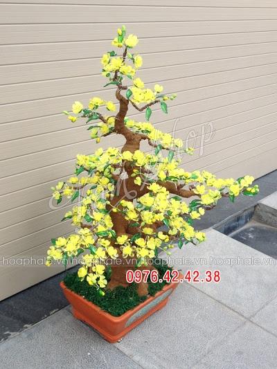 Hoa da pha le tai Thanh Nhan