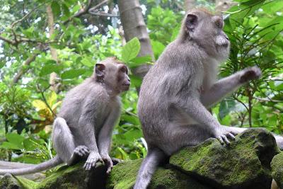 No colabores con la explotación de animales. Foto muy cerca del proyecto de Bali