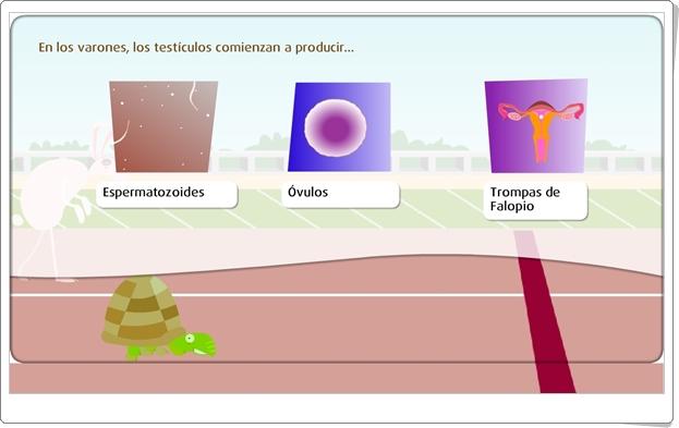 """""""Óvulos y espermatozoides"""" (Juego de Ciencias Naturales de Primaria)"""