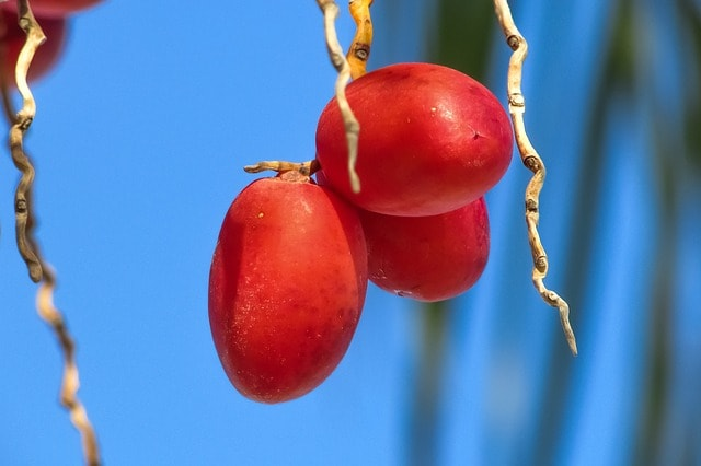 Makanan Penambah Darah Paling Ampuh