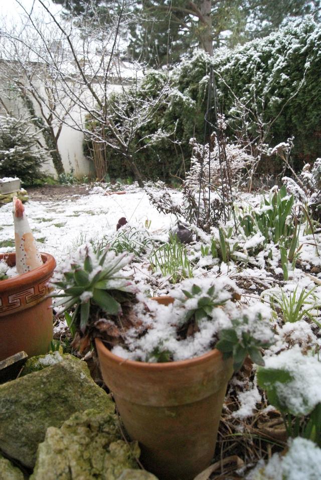Schnee im Garten Anfang Februar