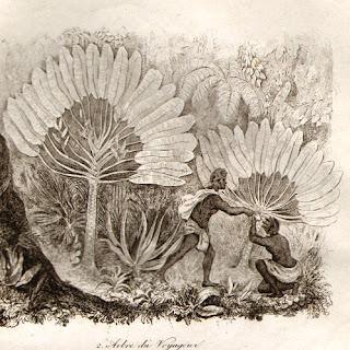 Gravure ancienne ravenale Sainte-Marie Madagascar