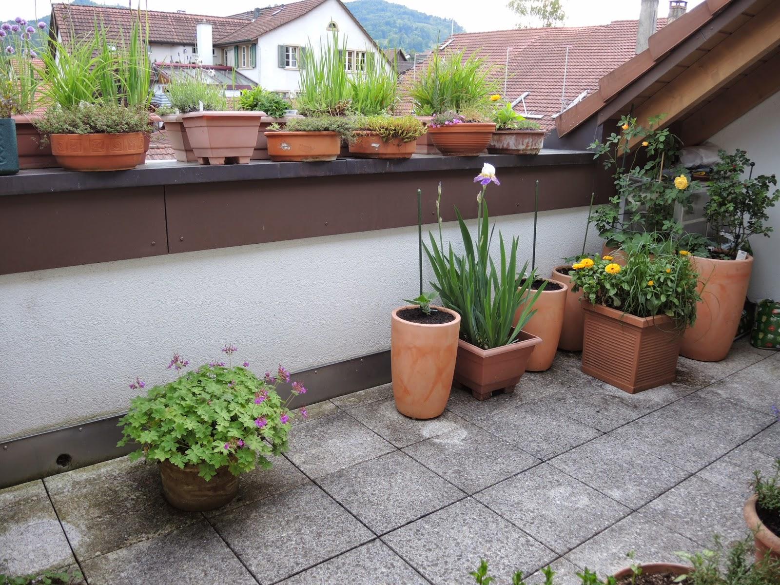 netzwerk balkongarten fragen zu meinem balkon aus dem. Black Bedroom Furniture Sets. Home Design Ideas